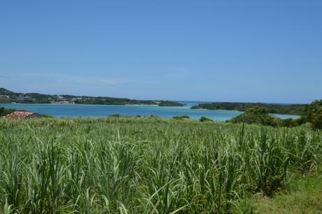 8とうきび畑とビーチ
