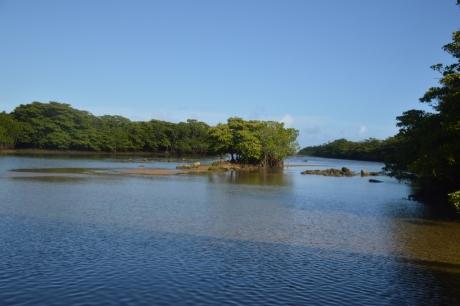 18宮良川のマングローブ