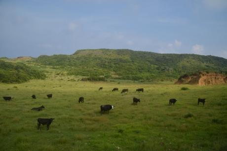 7山の中の牧場