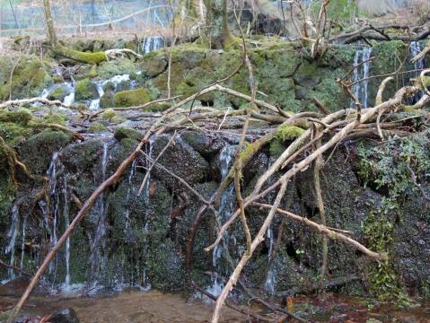 26山葵田の水源