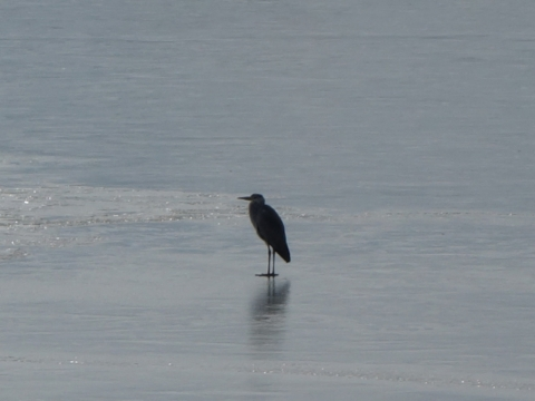 14薄氷の山中湖