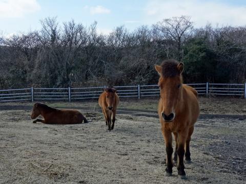 44三原山の馬