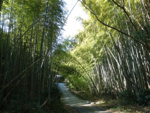 22竹の道