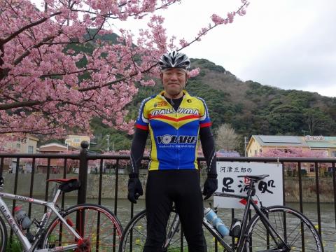08河津桜KTY