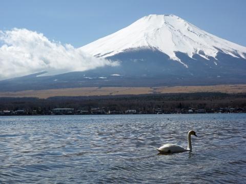 10山中湖 白鳥