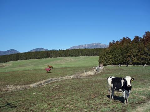 12放牧場
