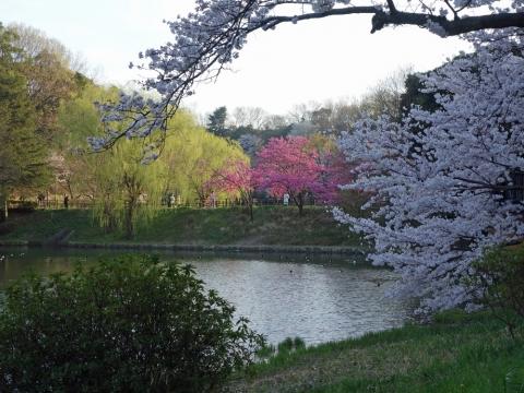 01三ッ池公園