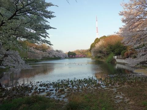05三ッ池公園
