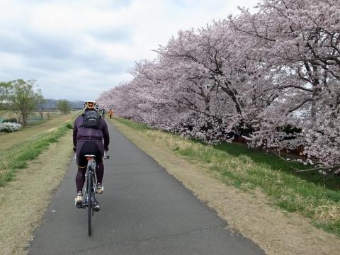 05クジラ運動公園の桜