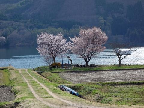 56木崎湖の春