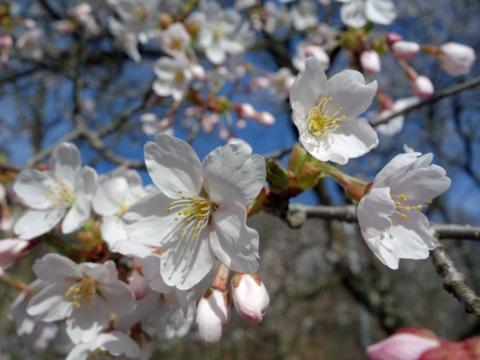 58木崎湖の春