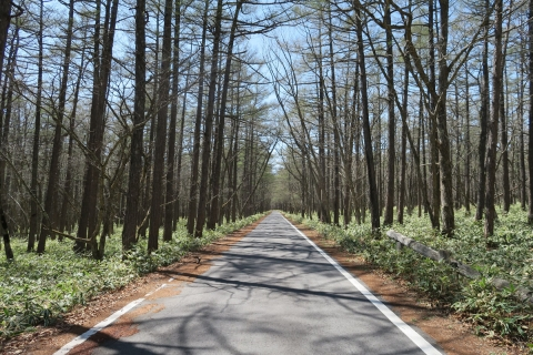 28小田代ヶ原への道