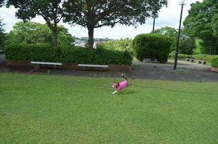 20150628外小代公園29