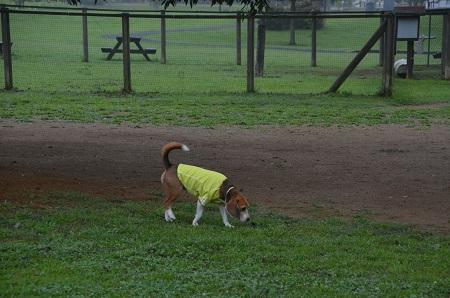 20150702北総花の丘公園ドッグラン14