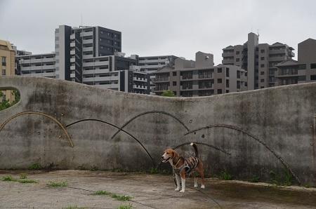 20150707草深公園13