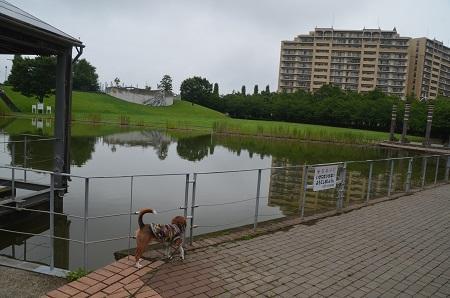 20150707草深公園24