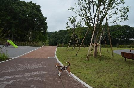 20150707別所谷津公園06