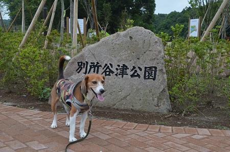 20150707別所谷津公園04