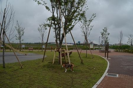 20150707別所谷津公園07