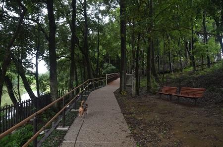 20150707別所谷津公園16