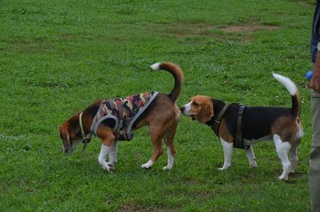20150707北総花の丘公園ドッグラン02