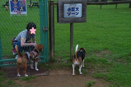 20150707北総花の丘公園ドッグラン08