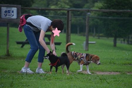 20150707北総花の丘公園ドッグラン17