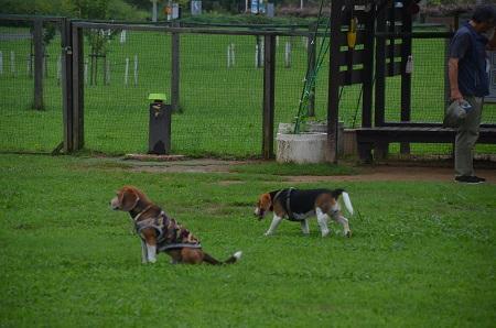 20150707北総花の丘公園ドッグラン35