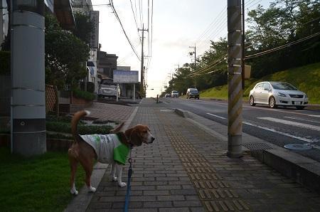 20150711佐倉城址公02