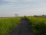 向かい風のサイクリングロード