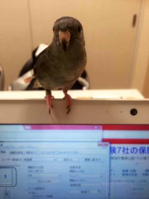 ひじきちゃん20150207-6