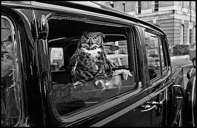 owl-blog3.jpg