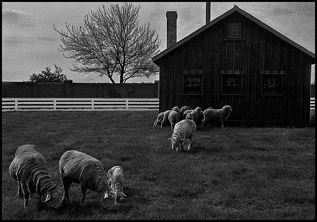 sheep117-blog4.jpg