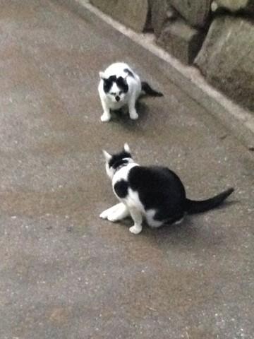 ネコがいっぱい (9) (コピー)