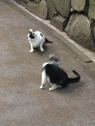 ネコがいっぱい (10) (コピー)