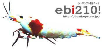 ebi210blog.jpg