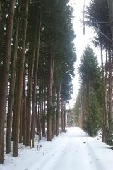 芦野公園1-4 (12)_600