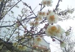 開花4-6 (4)_600