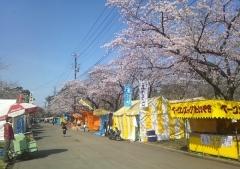 桜歩き4-19 (4)_600
