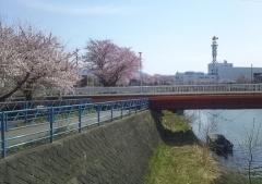 桜歩き4-19 (6)_600