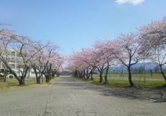 桜歩き4-19 (10)_600