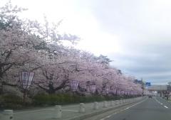 弘前公園4-21 (1)_600