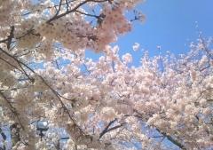 弘前公園4-21 (2-2)_600