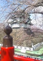弘前公園4-21 (4-3)_600