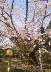 弘前公園4-21 (5-2)_600