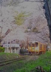 芦野公園桜4-22 (1)_600