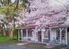 芦野公園桜4-22 (2)_600