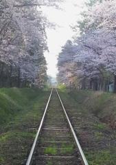 芦野公園桜4-22 (3)_600