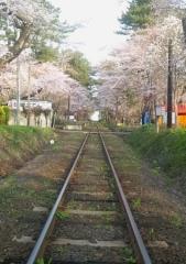 芦野公園桜4-22 (4)_600