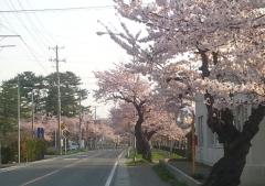 芦野公園桜4-22 (5)_600